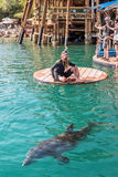 Beach Dolphin Reef in Eilat. stock image