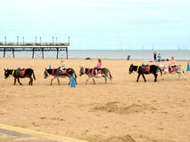 Beach Donkey Rides, Skegness. Royalty Free Stock Photo