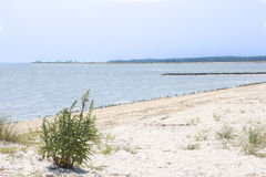 Beach on Dover, Delaware, USA. Empty sandy beach in Dover, Delaware, USA on sunny day stock images