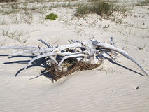 Beach Driftwood. Stock Images