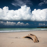 Beach driftwood and dark blue sky Royalty Free Stock Images