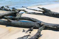 Beach Driftwood Royalty Free Stock Photography
