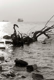 Beach, driftwood and ships against the setting sun, selective focus Royalty Free Stock Photos