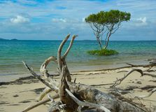 Beach with driftwood and trees Royalty Free Stock Photos