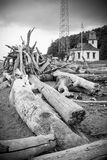 Beach Driftwood Washed Ashore Royalty Free Stock Photo