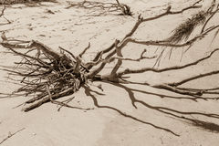 Beach Driftwood Stock Images