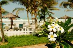 Beach in Dubai. A beautiful beach with palms in Dubai Stock Image