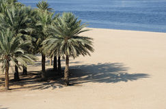Beach at Dubai Creek Stock Images