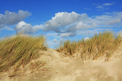 Beach dune and blue sky. Beach dune grass in the wind under blue sky Royalty Free Stock Image