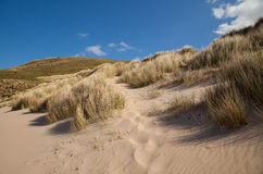 Beach dunes. With grass and a deep blue summer sky in northern Scotland Royalty Free Stock Photos