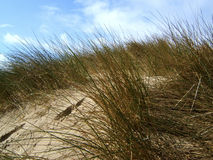 Beach dunes Royalty Free Stock Photo