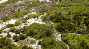 Beach Dunes and Coastal Forest Stock Photography