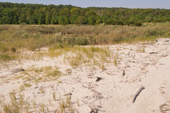 Beach, Dunes, Driftwood and Tidal Pool. Showing established beach grass, and seaoats cover near Lusby, Maryland USA royalty free stock photo