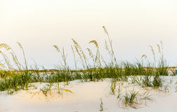Beach with dunes and green grass in sunset Stock Photos