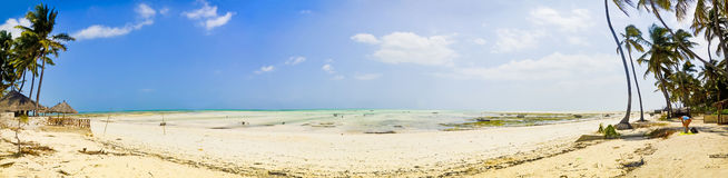 Beach at the ebb. Panoramic of the Beach at the ebb on Zanzibar Royalty Free Stock Photo