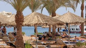 Beach in Egypt stock video footage