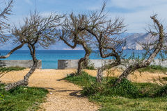 Beach entrance. With funny looking trees Stock Photos