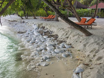 Beach erosion. Sand bags used to protect beach from erosion caused by the rise of the oceans due to global warming Stock Photos