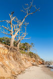 Beach erosion. Natural erosion along the shoreline on Big Talbot Island in Jacksonville Stock Images
