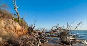 Beach erosion. Natural erosion along the shoreline on Big Talbot Island in Jacksonville Stock Photo