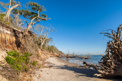 Beach erosion. Natural erosion along the shoreline on Big Talbot Island in Jacksonville stock image
