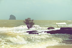 Beach erosion, trees in the surf. Due to changing tide levels stock photo