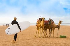 Beach of Essaouira, Morocco, Africa. Royalty Free Stock Photo