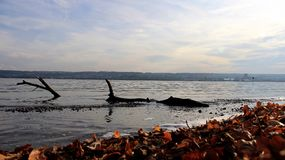 Autumn leaves by Bodensee Lake Stock Photos