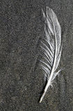 Beach Feather Royalty Free Stock Images