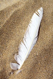 Beach Feather Stock Photography
