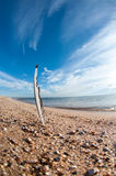 Beach feather. Stock Images