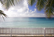 Beach Fence. Palm trees at exotic beach Royalty Free Stock Photo