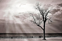 Beach fence and tree Royalty Free Stock Images