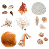 Beach findings Royalty Free Stock Photography
