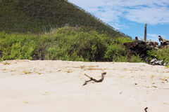 Beach of Floreana with scrubland. Ecuador stock photography