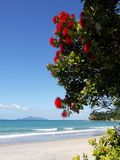 New Zealand: red flowering tree at beach. Empty beach with flowering native Christmas tree (pohutukawa), Langs Beach, Northland, New Zealand Royalty Free Stock Photos