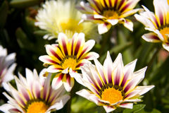 Beach flowers Royalty Free Stock Images