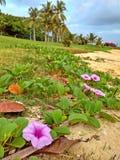 Beach flowers Stock Photo