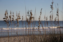 Beach Flowers. And reeds next to ocean stock photo
