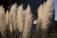 Beach Flowers. And reeds next to ocean stock images