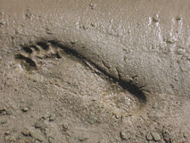 Beach footprint Stock Photo