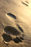 Beach Footprints. Footprint trail in golden sand at sunset Royalty Free Stock Image