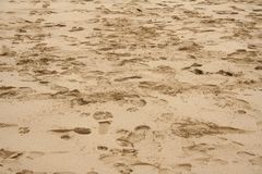 Beach Footprints. Foot prints on the beach Royalty Free Stock Image