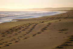Beach footprints. Walkers on a dusk beach leave footprints in the sand stock image