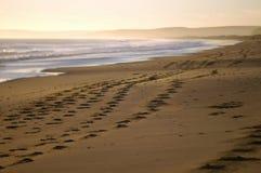 Beach footprints Stock Image