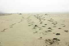 Beach footprints fading away...Vancouver Island. Fading into mist on the beach Royalty Free Stock Photos