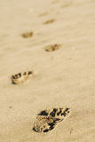 Beach footsteps. Footsteps on the sandy bach Royalty Free Stock Photo