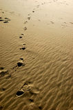 Beach Footsteps. Footsteps printed into the beach sand Royalty Free Stock Photo