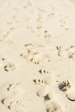 Beach footsteps Stock Photos