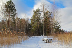 Beach forest lake with a bridge on a sunny winter day. Stock Images